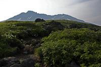 夏山花と雲と鳥海と - tabi & photo-logue vol.2