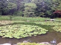 梅雨の晴れ間に - MOTTAINAIクラフトあまた 京都たより