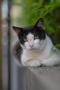 夏休みだよ全員集合!その4・ナツ - Black Cat Moan
