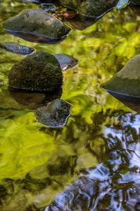 夏の渓流 - デジカメ写真集