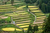 収穫の時、松之山にて - デジカメ写真集