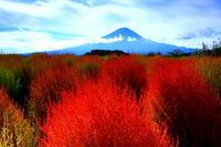 28年10月の富士(3-4) - 富士への散歩道 ~撮影記~