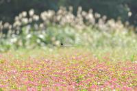 夕方のおすすめコウモリ - お花びより
