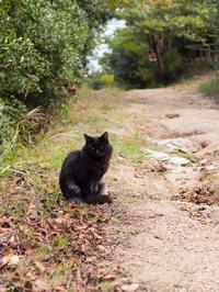 王子ヶ岳野良猫 - 風まかせ、カメラまかせ