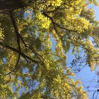 ハーブテントと足つぼ - aloha healing Makanoe