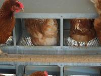 「卵のお届け状況およびお歳暮等のご予約について181108」 - 自然卵農家の農村ブログ 「歩荷の暮らし」