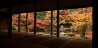 紅葉だより2016~洛北・蓮華寺~(11/23) - ばってらの放浪季