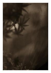 Leaf#8 - VELFIO