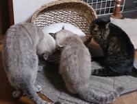 ウサちゃんがお気に召さなかったベッドが我が家へ(岡) - 柚の森の仲間たち