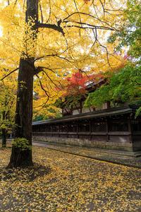 京都の紅葉2016 ぶらり紅葉めぐり(今出川界隈) - 花景色-K.W.C. PhotoBlog