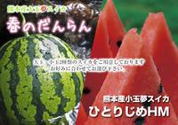 夢スイカ平成31年3月下旬の収穫へ向け小玉スイカ『ひとりじめHM』の定植後の様子を現地取材 - FLCパートナーズストア