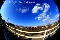 謹賀新年 - TURF DREAMS