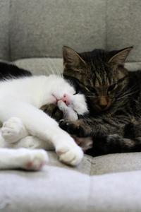 小梅とナツ・後編 - Black Cat Moan