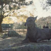 鹿 - Through The Finder