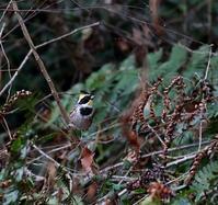 初撮はやはりMFのミヤマンだった・・・ - 一期一会の野鳥たち