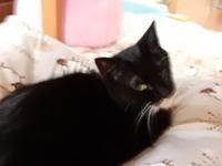 のらくろレポート(29)松島編① - 愛犬家の猫日記