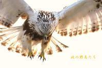 ケアシノスリ - 北の野鳥たち