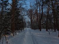 冬の森足跡の主は - 北緯44度の雑記帳