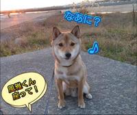 初ガミガミ(笑) - 犬が西向きゃ尾は東♪