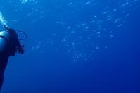 17.1.4好天、つづき - 沖縄本島 島んちゅガイドの『ダイビング日誌』