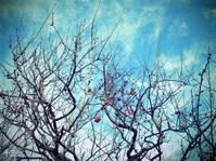 八重寒紅 - Daydream