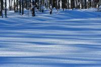 冬の十勝③ - Photo Of 北海道大陸