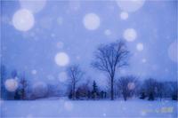 降雪の散歩 - 藍の郷