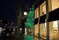 今月の一枚::北山通のツリーDec.2016 - のんきなとうさんの蓼科偶感