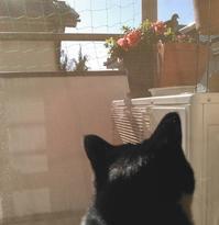 はとがきました - 黒白猫うーこの自宅日記。
