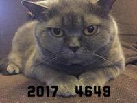 新年のご挨拶 - tsuruhashi