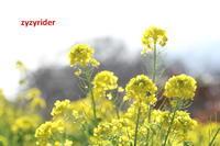 寒い季節でも - ジージーライダーの自然彩彩