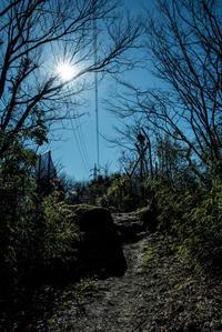 森の中で - 気の向くままに…
