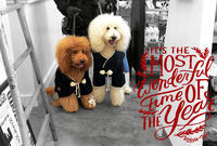 Happy new year!! - Doggie Do!! / good dog and hello cat !!