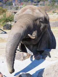 ゾウさんを撮る! - さして意味なし、面白くもなし