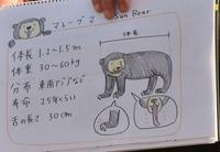 新春ぐるぐるガイドヒグマ・マレーグマ - 徒然日記
