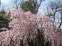 和歌山城【午後の紅茶 さん】 - あしずり城 本丸