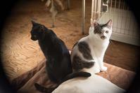 殺処分 - 犬と猫の日々
