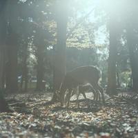 鹿2 - Through The Finder