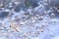 2017初雪 - 笑顔同封