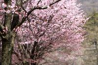 春よ来い!早く来い… - リターンライダーのひとり言