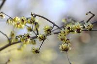 春探し - 風の翅