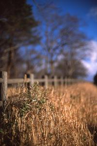 枯れ誇る冬の夏草 - Film&Gasoline