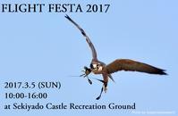 フライトフェスタ2017開催のお知らせ&競技参加人数調査へのご協力のお願い - 新米ファルコナー(鷹匠)の随想録