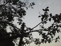 こごえる月の花… - 侘助つれづれ