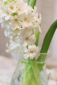 春の香り - クラシノカタチ