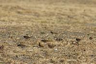 ★西なぎさの草地にも注目してみてください - 葛西臨海公園・鳥類園Ⅱ