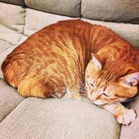 不安感と恐怖心 - いぬ猫フェレット&人間