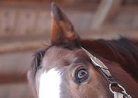 245鞍目続かない - 美味しい時間と馬と犬