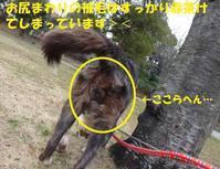 なぜかお笑い系キャラに・・・(笑) - もももの部屋(怖がりで攻撃性の高い秋田犬のタイガ、老犬雑種のベスの共同生活&保護活動の記録です・・・時々お空のモカも登場!)