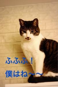 にゃんこ劇場「高さ勝負!」 - ゆきなそう  猫とガーデニングの日記
